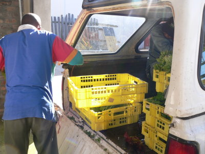 Anlieferung des Gemüses von Townshipfarmern.