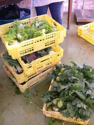 Sortieren, Waschen und verpacken des Gemüses.